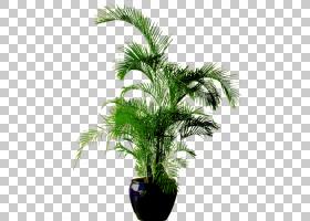 棕榈树背景,草,棕榈树,树,槟榔,室内植物,植物,常绿,3D计算机图形