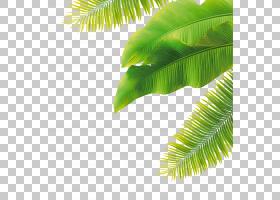 棕榈树背景,草,线路,绿色,棕榈树,树,槟榔,植物,水印,香蕉,叶,香