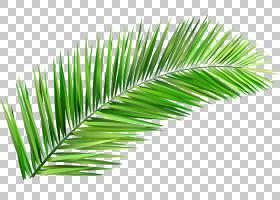 棕榈树背景,草,线路,绿色,棕榈树,草族,槟榔,植物,散文,讲故事,猴