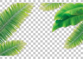 卡通棕榈树,草,棕榈树,槟榔,植物,共享,树,水印,免费,光栅图形,天