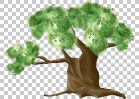 树木木本植物椰子树PNG clipart叶蔬菜,摄影,分支机构,草,树,灌木