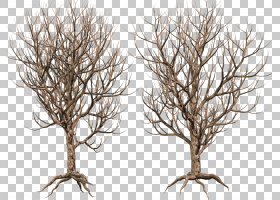 树木本植物树枝共享PNG剪贴画分支机构,小树枝,木材,艺术,艺术,树