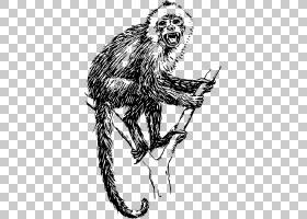 日本猕猴狮子尾猕猴卷尾猴猴子PNG clipart哺乳动物,动物,猫像哺