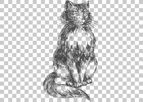 孟加拉猫小猫素描图,手绘猫PNG剪贴画哺乳动物,动物,猫喜欢哺乳动