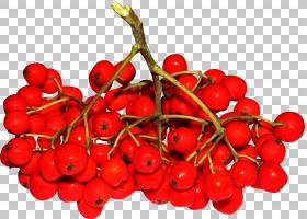 山梨aucuparia花an浆果粉红胡椒,樱桃PNG剪贴画天然食品,fruttiDi