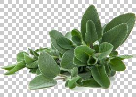 夏季白色背景,草药,植物,克莱莉,白圣人,灌木,黄酮类化合物,植物