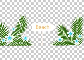 夏季背景模式,草,云杉,针叶树,分支,棕榈树,常绿,圣诞装饰,模式,