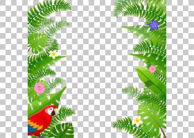 夏季海报背景,草,分支,绿色,树,叶,植物群,植物,松科,火灾,海报,