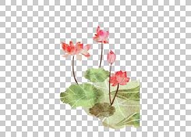 夏季海报背景,草本植物,花卉设计,插花,花,植物茎,花卉,花盆,花瓣