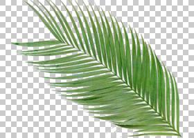 卡通棕榈树,羽毛,草,线路,植物茎,棕榈树,草族,槟榔,植物,棕榈叶
