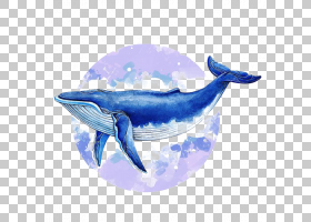 鲸鱼卡通,电蓝,钴蓝,蓝色,鲸类,绘图,海,海豚,水彩画,鲸鱼,蓝鲸,