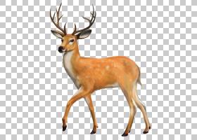 驯鹿卡通,白尾鹿,驯鹿,野生动物,休闲鹿,喇叭,骡鹿,鹿角,马鹿,白