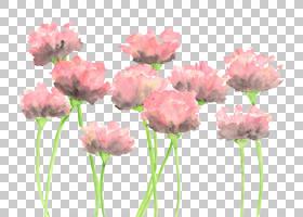 粉红色抽象背景,人造花,一年生植物,植物茎,粉红色家庭,花瓣,植物