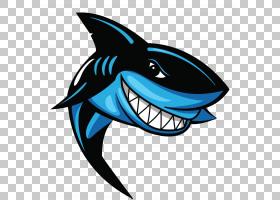 大白鲨背景,符号,软骨鱼,海豚,鱼,鲸鲨,蓝鲨,虎鲨,鲨鱼鳍,锤头鲨,