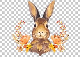 秋天的叶子颜色收获感恩节可爱的兔子棕色和黑色的兔子插图PNG剪