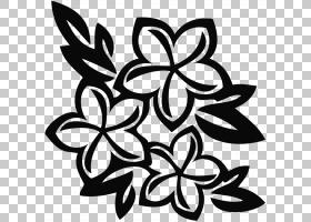 手绘花卉设计花鸡蛋花PNG剪贴画铅笔,叶,枝,单色性,对称性,鸡蛋花