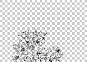 手绘黑白花花艺设计,花PNG剪贴画白色,摄影,分支机构,阴影,单色,