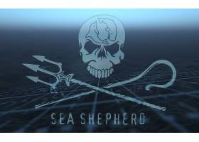 海,牧师,鲸,战争,壁纸,