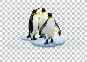 地球背景,鸟,喙,不会飞的鸟,海鸟,冰川,小企鹅,帝企鹅,chinstrap