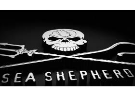 海,牧师,鲸,战争,壁纸,(2)