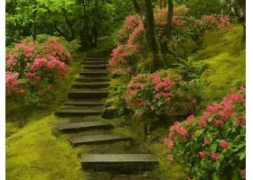 花园,苔藓,花,楼梯,壁纸,