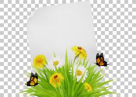 夏花背景,膜昆虫,无脊椎动物,大黄蜂,蜜蜂,野花,帝王蝴蝶,传粉者,