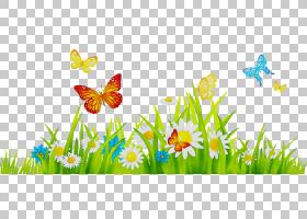 夏季自然背景,花瓣,水仙,传粉者,夏天,野花,飞蛾与蝴蝶,昆虫,植物