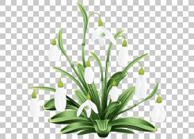 夏花背景,阿米利斯族(Amaryllis Family),植物茎,夏日雪花,花盆,