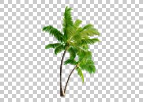 夏棕榈树,花盆,植物茎,叶,槟榔,树,棕榈树,植物,海滩,花瓣,植物,D