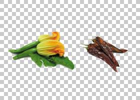 夏花背景,烹饪,南瓜属,夏季壁球,食谱,油炸,乳清干酪,食物,蔬菜,