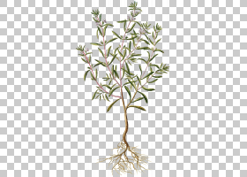 夏花背景,亚灌木,花,花盆,细枝,植物茎,植物群,分支,树,美味,烹饪