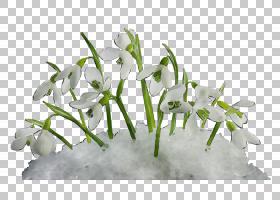 夏花背景,石斛,夏日雪花,植物茎,花束,切花,阿米利斯族(Amaryllis
