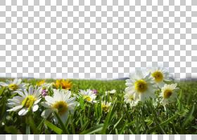 夏花背景,草,黛西,野花,场,雏菊家庭,天空,花瓣,春天,草甸,花,植