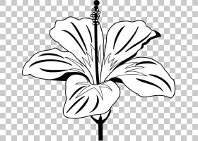 黑白花,视觉艺术,分支,线路,花瓣,树,叶,植物群,黑白,白色,植物,