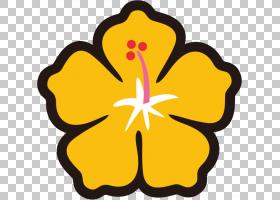 夏季绘画,野花,草本植物,梅洛家族,植物,花瓣,芙蓉,夏威夷芙蓉,黄