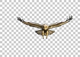 夏日卡通,秃鹫,野生动物,机翼,鹰,猛禽,喙,避暑别墅,波希米亚瓦克