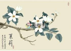 中国风水墨茉莉花插画