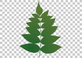 夏花背景,树,季节,灌木,夏天,玫瑰,阁楼,花,楼梯,绿色,植物,日本