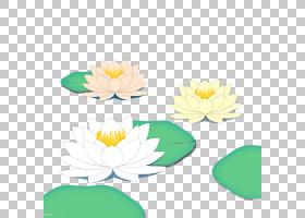 夏花背景,绿色,黄色,花瓣,花,植物,夏天,莲子,丽霞,节气,