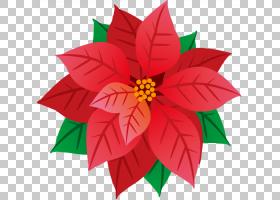 夏花背景,花瓣,大丽花,植物群,叶,植物,春天,夏天,花,圣诞节,冬天