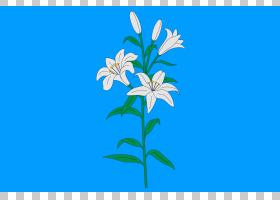 夏花背景,莉莉,植物茎,铃兰家族,花,天空,植物群,植物,夏天的500