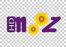 夏花背景,非洲菊,雏菊家庭,向日葵,黄色,紫罗兰,紫色,文本,夏天,