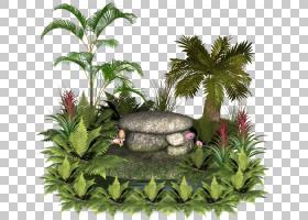棕榈树背景,草,棕榈树,槟榔,景观美化,叶,Chamaedorea,花盆,树,槟