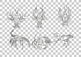 银色背景,线路,白银,身体首饰,虾,绘图,黑白,线条艺术,棒状图形,