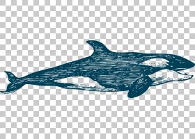 鲸鱼卡通,动物形象,鱼,鳍,蓝色,绘图,白鲸,鲸鱼,鲸类,白鲸,动物,