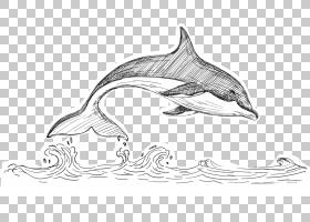 鲸鱼卡通,野生动物,黑白,线路,线条艺术,鱼,白鲸,水生动物,蓝鲸,