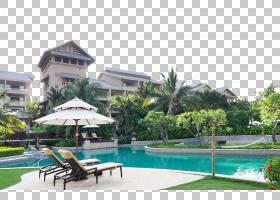 棕榈树背景,景观美化,住宅区,财产,回家,房地产,共管公寓,休闲,房