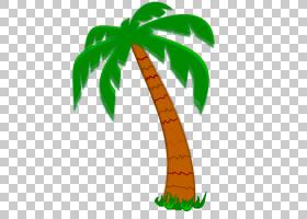 棕榈树背景,植物茎,棕榈树,树,花盆,槟榔,叶,植物,假期租赁,全封