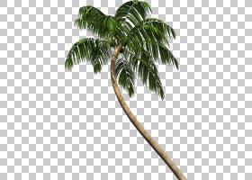 椰子树卡通,椰子,叶,槟榔,棕榈树,树,植物,Costa Del Sol,Torremo