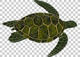 海龟背景,木头,Caretta,后院,动物,海马,瓷砖,游泳池,龟壳,陶瓷,